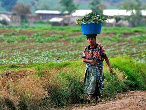 mujer agricultura